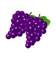 icon grapes vector image vector image