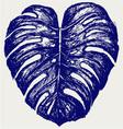 Big leaf of Monstera plant vector image