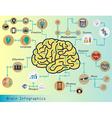 Brain Infographic vector image
