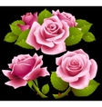 Pink roses set vector image