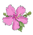 Pink flower with buds realistic view with ink vector image