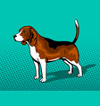 dog beagle pop art style vector image