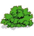 Green Cartoon Shrub vector image