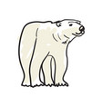 white bear hand drawn isolated icon vector image