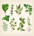 Seasoning and dressing herbs vector image