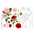 pink and red rose outline vector image