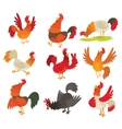 Cute cartoon rooster cock character vector image