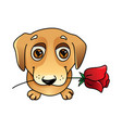 cute dog in love with rose vector image