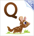 Animal alphabet for the kids Q for the Quoll vector image vector image