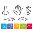 Five human senses smell sight hearing taste vector image