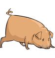 pig sniffing vector image