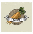 carrot vintage set of labels emblems or logo for vector image