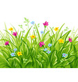 grass with wild flowers vector image