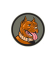 Pitbull Dog Mongrel Head Circle Woodcut vector image