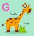 isolated animal alphabet letter g-grass giraffe vector image
