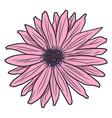 pink gerbera drawing by hand vector image