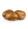 Potatoes vector image vector image