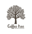Hand drawn graphic tree with coffee beans vector image