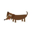Dachshund dog breed with tongue Cute cartoon vector image