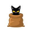 cat in bag pet in sack allegory bad buy vector image