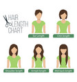 hair length chart front view vector image