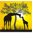 Giraffes and sunset vector image vector image