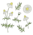 Camomile with stem and leaves hand drawing on a vector image