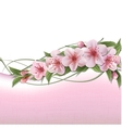 Spring background with pink cherry flowers vector image