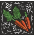 ripe carrots logo design template fresh vector image