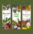 three vertical banners with exotic fruits vector image