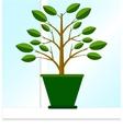 Ficus on the windowsill vector image