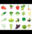 fresh vegetables and herbs color flat icons vector image