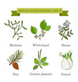 vintage collection of hand drawn medical herbs and vector image