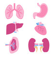 internal organs set viscera set flat style vector image