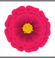 flower dahlia isolated on a white background vector image