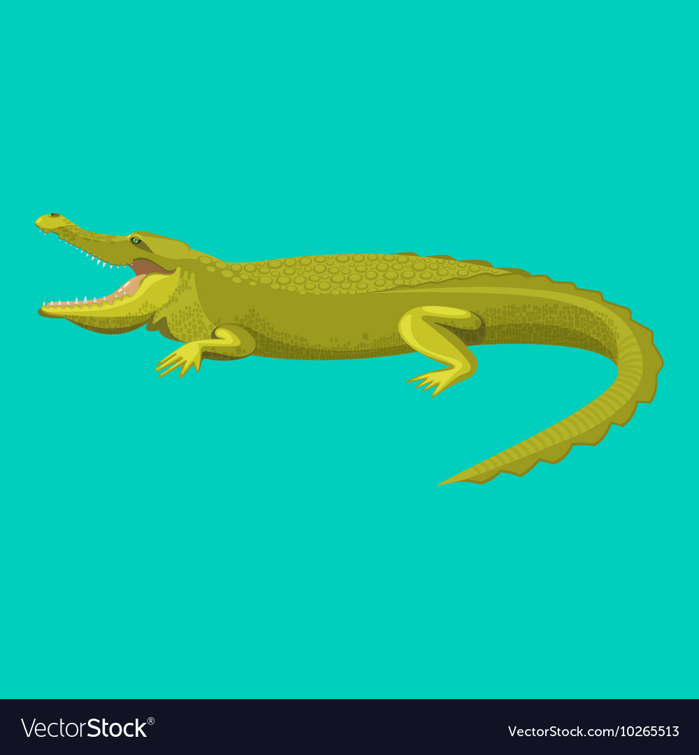 Dangerous green alligator is showing his teeth vector
