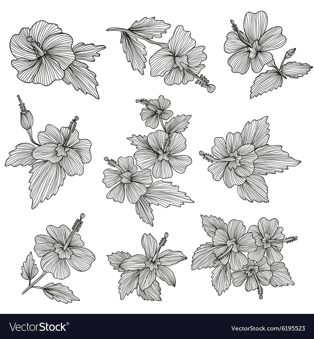 Hibiscus flowers set vector