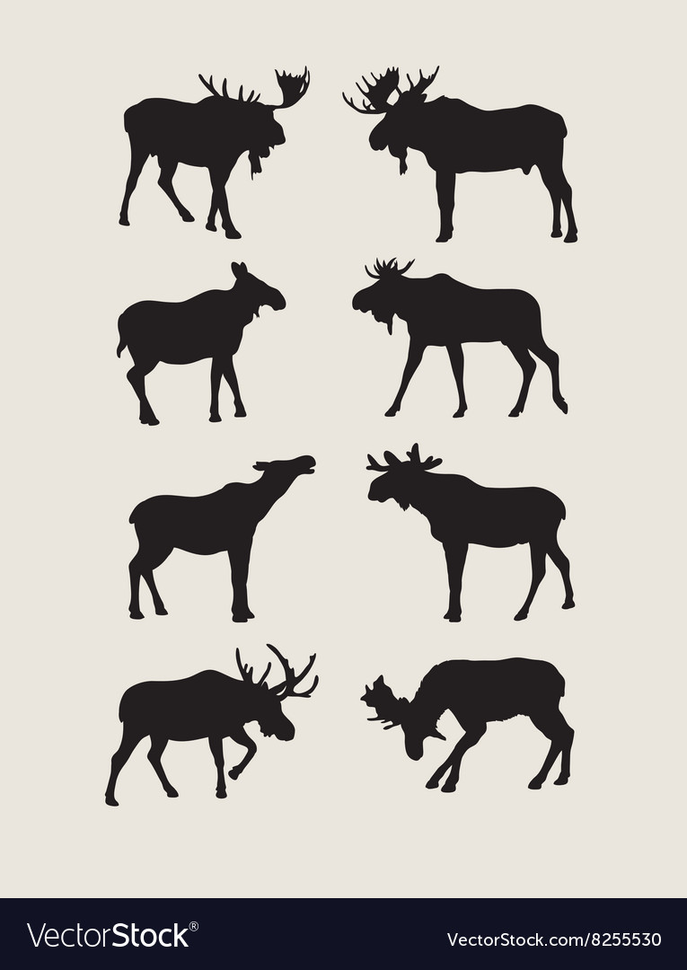 Bull moose silhouettes vector
