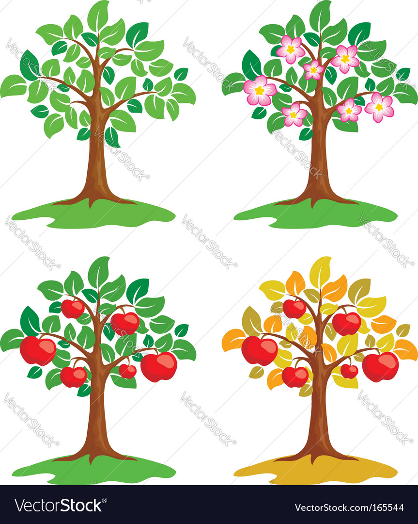 Apple tree at different seasons vector