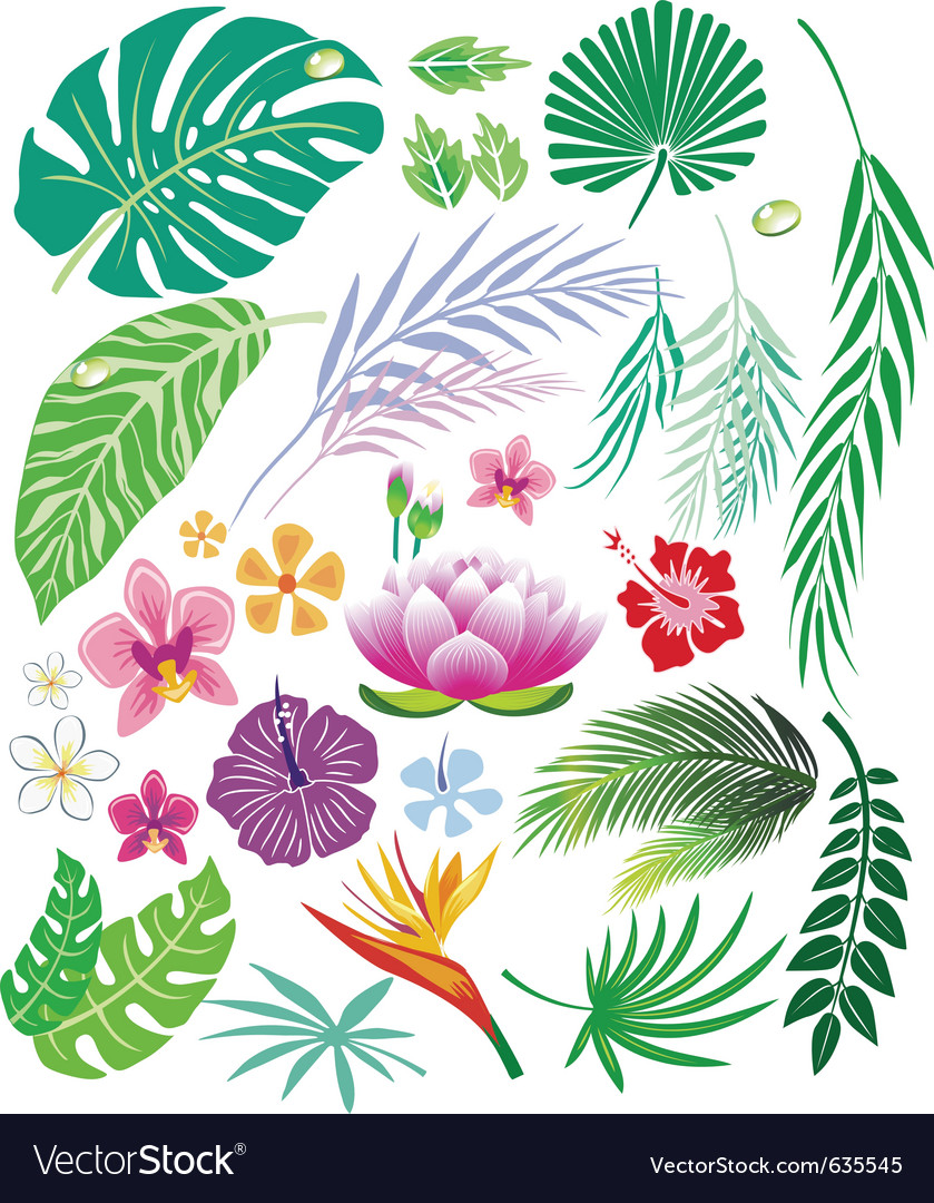 Tropical leaf and flowers vector