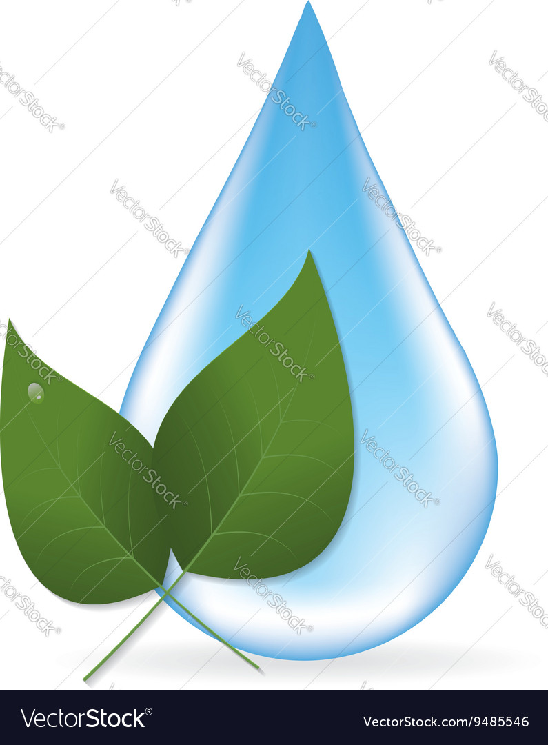 Water drop and two leaves vector