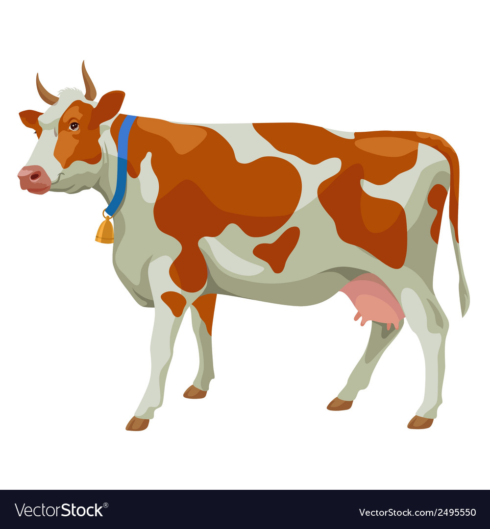 Brown and white cow side view isolated vector
