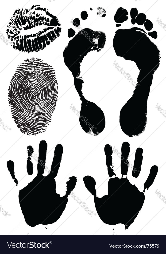 Human hands feet lips vector