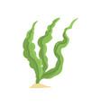 long green algae isolated vector image