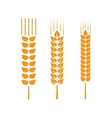 Set of wheat ears or rice vector image