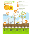 Gardening work farming infographic Peach Graphic vector image