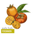 persimmon slice fruits and leaves vector image