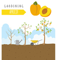 Gardening work farming infographic Apricot Graphic vector image