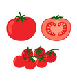 collection of fresh red tomatoes vector image