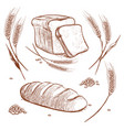 bunch of wheat ears and bread hand drawn vector image vector image